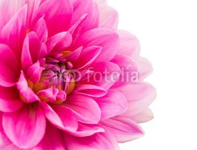 Obraz w ramie Różowy kwiat