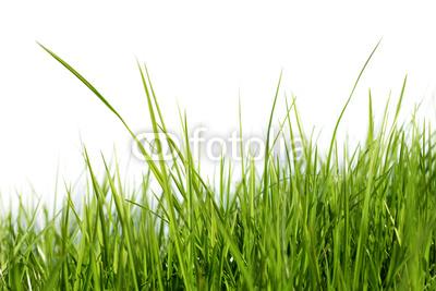 naklejka Źdźb�a trawy 13312015 wf162 naklejki do